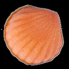 草莓貝殼蛋糕